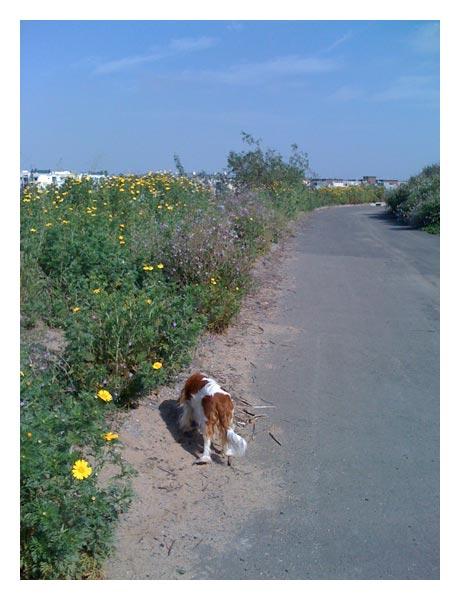 Flowersontrail